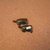 2 Tortoises